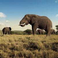 Afrique du Sud : des incentives dans la nation 'arc-en-ciel'