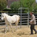 HP forme ses commerciaux avec des chevaux