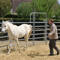 Des commerciaux et managers commerciaux d'HP France ont suivi une formation en développement personnel basée sur des exercices avec des chevaux.