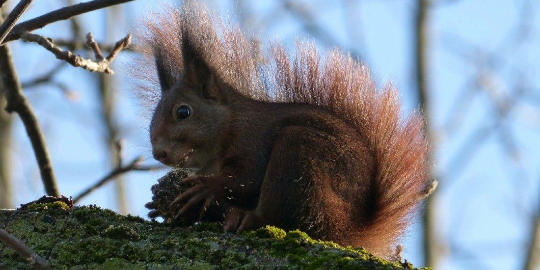 Les commerciaux sont-ils des écureuils ?